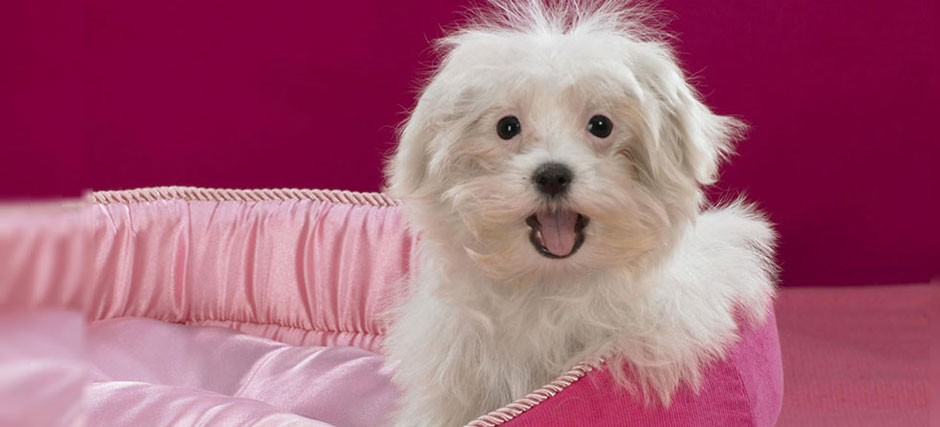 3 conseils de toilettage pour mettre un terme au grattage excessif des chiens